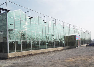 China Modern Design Agricultural Glass Greenhouse 3m - 6m Side Height Long Service Life supplier