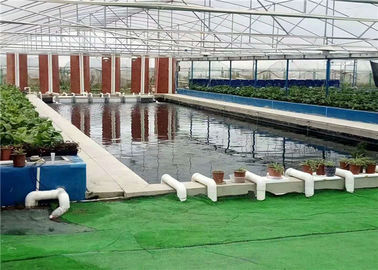 China Plastic Film Hydroponic Greenhouse Strong Ventilation Ability Convenient To Use supplier