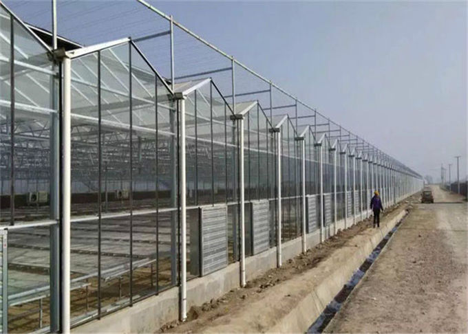 Large Size Venlo Type Glass Greenhouse Hot Galvanized Steel Skeleton Material