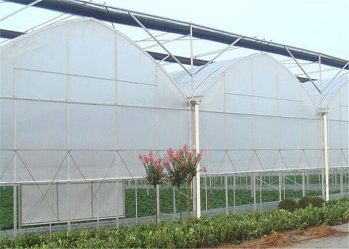 Eco Friendly Plastic Garden Greenhouse Galvanized Steel Tube Frame Structure