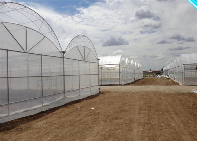 Large Plastic Cover Greenhouse Hot Galvanized Skeleton With Strong Ventilation Ability