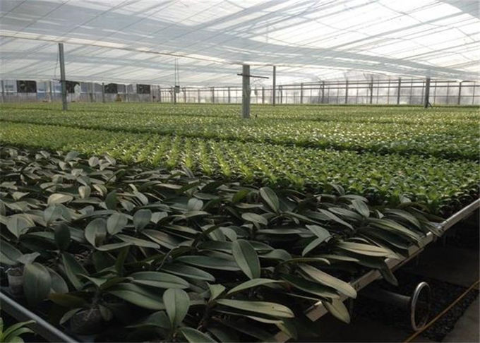 Good Ventilation Greenhouse Rolling Benches , Greenhouse Seedbed System 1.2 - 5.0mm Diameter